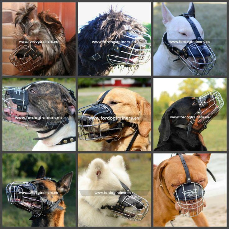Le proponemos el bozal M4, disponible en tallas pequeñas, medianas y grandes, apropiadas para todas las razas, desde #Yorkshire Terrier hasta #Dogo de Burdeos. El bozal permite al perro entreabrir la boca y jadear. Ver detalles https://www.fordogtrainers.es/index.php/bozales  #bozalesmetalicos #bozalesparaperros #bozaldemetal #yorkshireterrier #dogodeburdeos #goldenretriever #malinois #pastoraleman #rottweiler #bullterrier #amstaff #pitbull #terriernegro #samoyedo