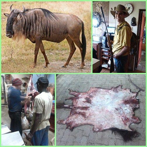 Afrikai szafari és kaszinó - vadászat