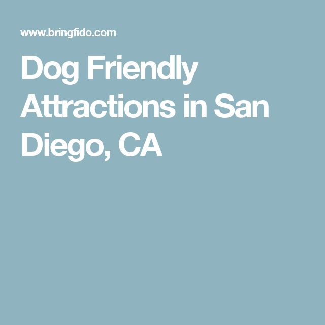 Dog Friendly Attractions in San Diego, CA