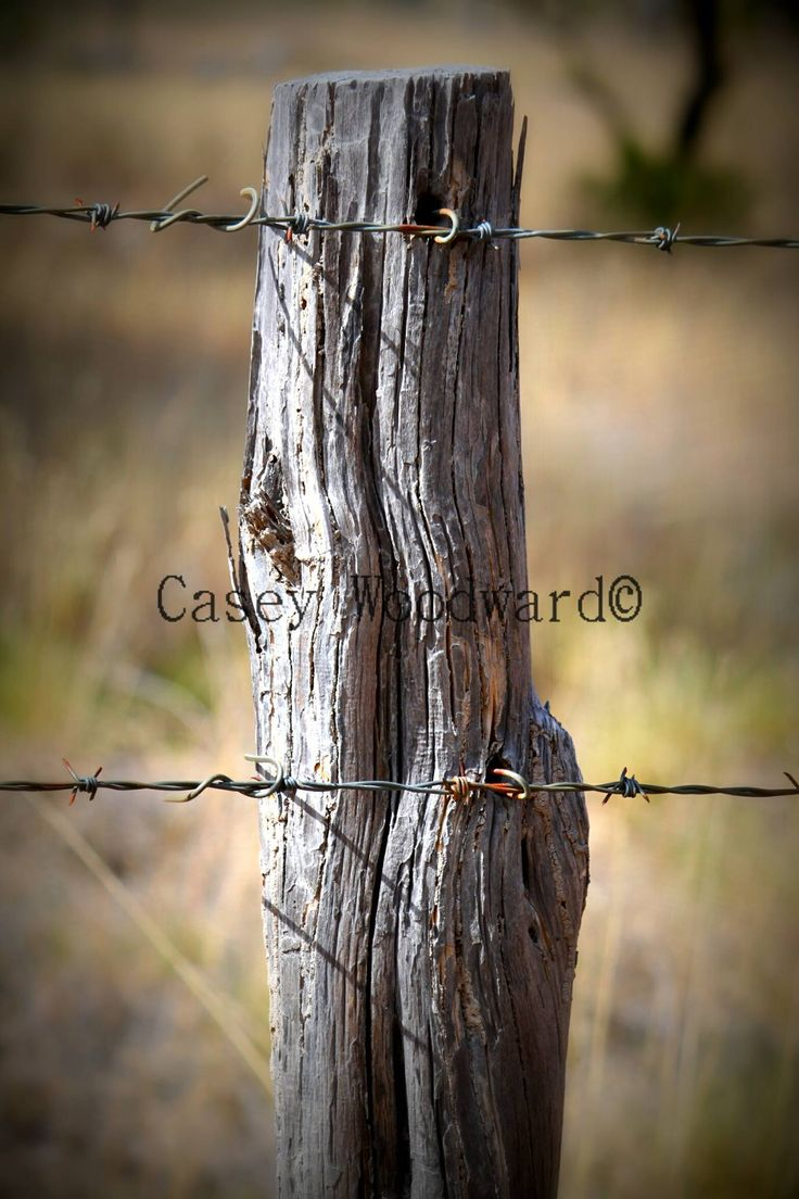 Love barbed wire