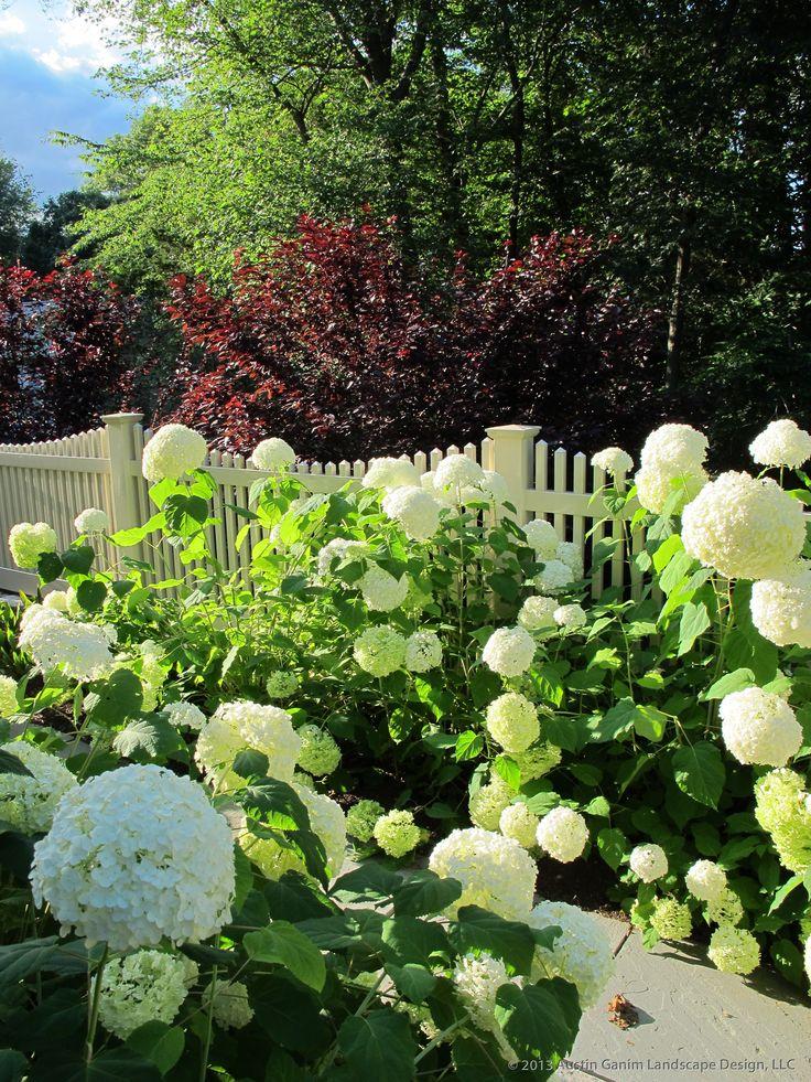 1000 images about hydrangeas on pinterest hydrangeas for Garden design llc