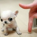 We Rule The Internet » A Gallery Of Cute Baby Animals To Put A Smile On Your Face