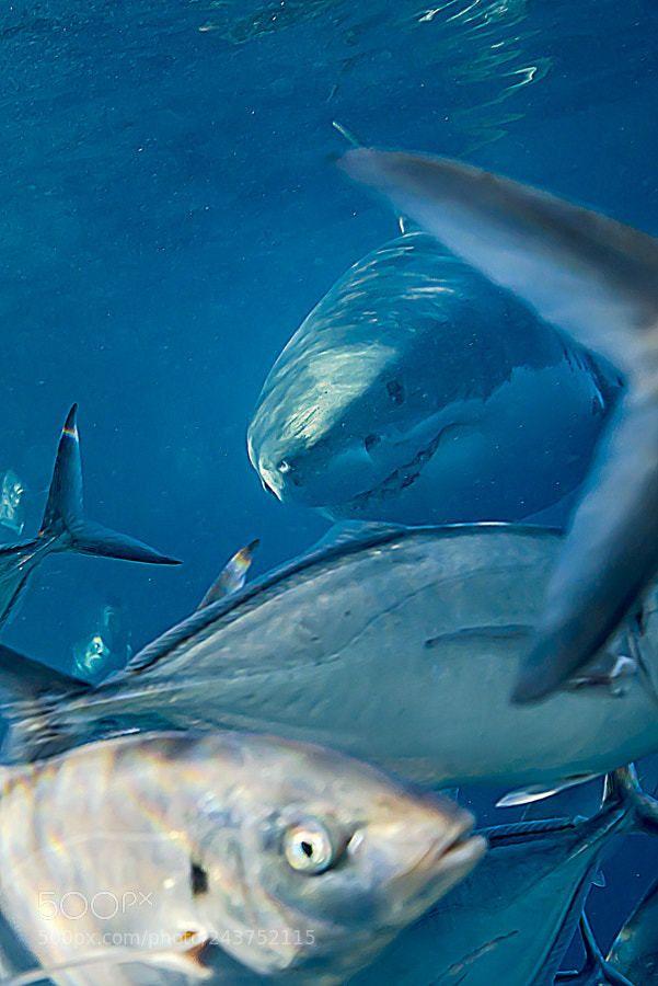 Best  Marine Biology Schools Ideas On   Marine