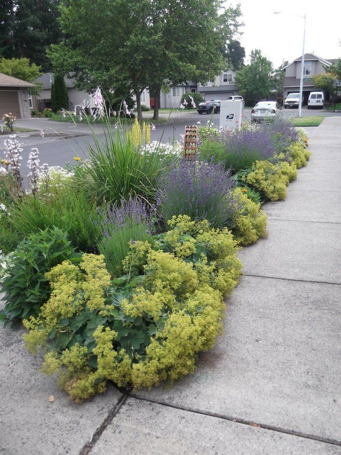Parking strip garden, small space landscapingGardens Ideas, Cities Sidewalk Gardens, Parks Strips Gardens, Boulevard Gardens, Strips Landscapes, Spaces Landscapes, Gardens Spaces, Outdoor Spaces, Sidewalk Strip Ideas