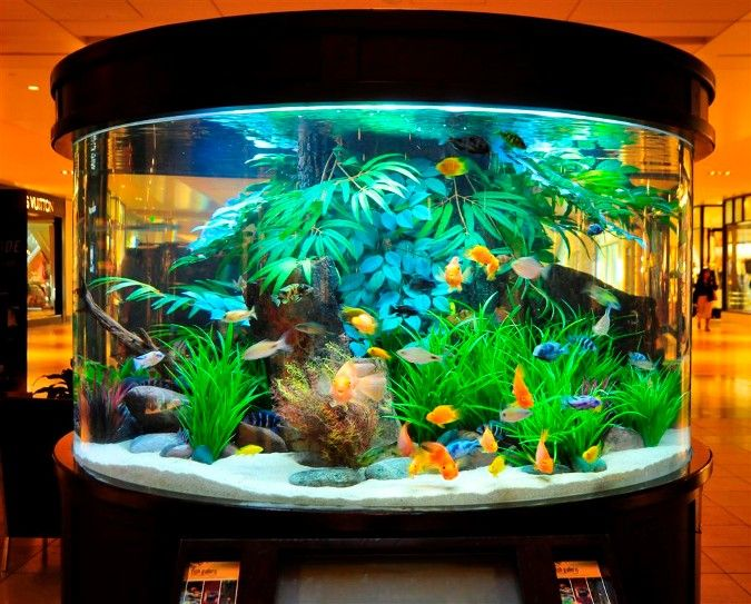 Freshwater Aquarium Design Ideas happy fish at play freshwater aquarium design ideas 10 gallon led Find This Pin And More On Aquarium Ideas And Design Freshwater