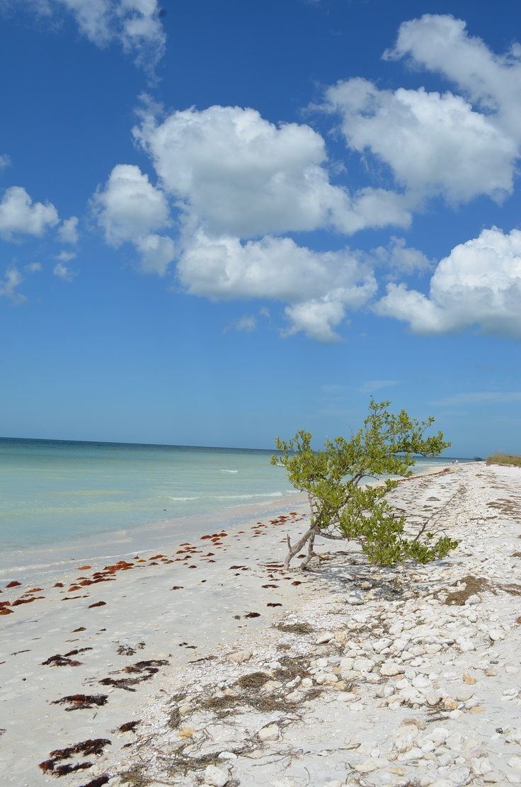 Best  Dunedin Florida Ideas That You Will Like On Pinterest - Florida map dunedin