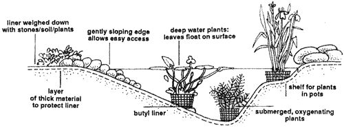 Setting up a planted pond