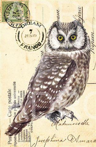 Items similar to Vintage OWL  French Carte Postale archival print on Etsy. , via Etsy.