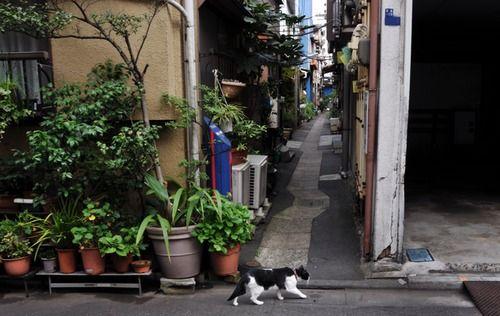 月島路地裏の猫