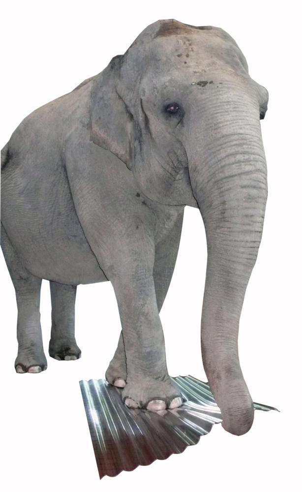 PC-Wellplatte (Elefantenplatte) im Test...!   Elefantendame mit 2,4 Tonnen Lebensgewicht läuft über die Platte...!