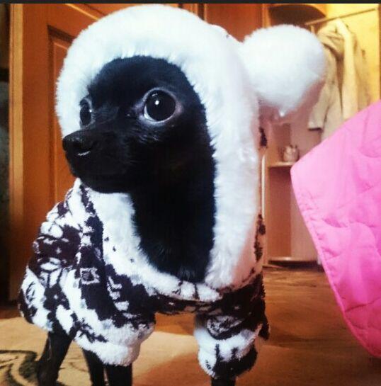 ( Cinza e preto ) cão macacão de lã Polar para Pet roupas para o inverno quente com capuz promoção ( S / M / L / XL / XXL ) alishoppbrasil