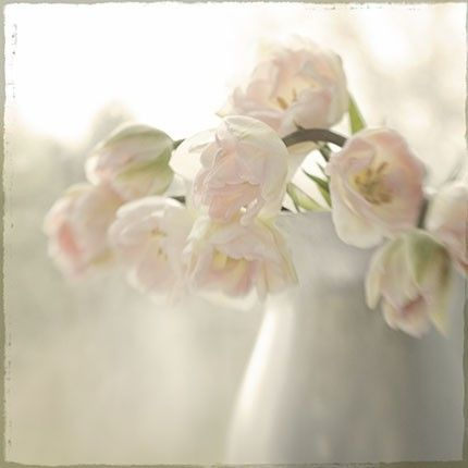 Soft Focus Tulip Photograph French Country Shabby by JudyStalus