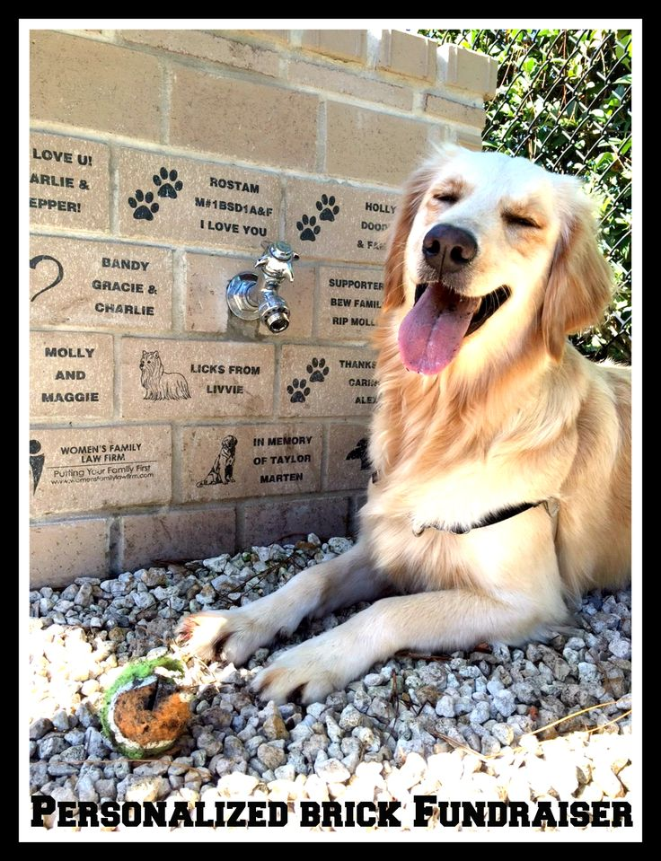 Yazmine's Dog Park Project turned out fabulous and fun by doing a Personalized Brick Fundraiser with That's My Brick!® The dogs sure are happy. Click to get your own information on doing a personalized brick & tile fundraiser.