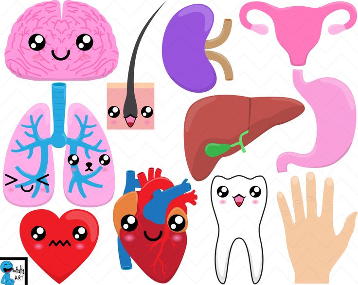 Organs - Digital Clip Art Graphics, Personal, Commercial Use, Instant download Set - 11 PNG images (00197) by HaHaHaArt on Etsy https://www.etsy.com/listing/237872959/organs-digital-clip-art-graphics