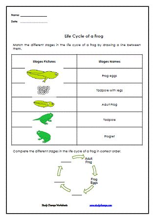 1000 images about science worksheets on pinterest frog life cycles recycling bins and four. Black Bedroom Furniture Sets. Home Design Ideas