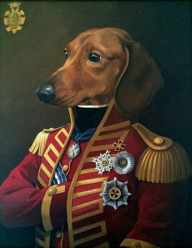 Major Dachshund