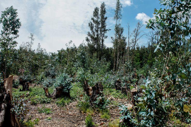 Urbanización- destrucción de la naturaleza