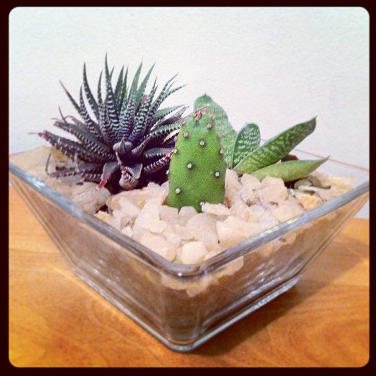 Variedad de cactus en cuarzo!