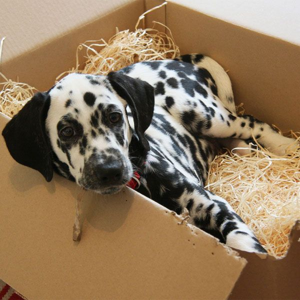 Life Is Hard; Here Are Some Pictures of Dalmatian Puppies to Help ...