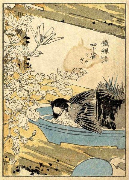 Estampe japonaise, 1880-1900 / ©Musée du Vivant - AgroParistech