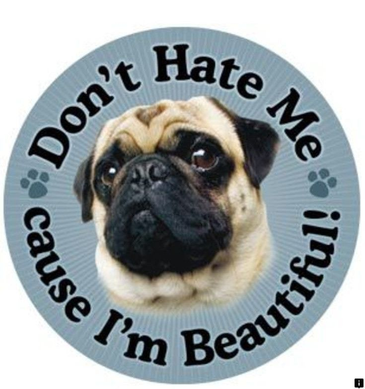 Find More Information On Pug Puppies Near Me Follow The Link To