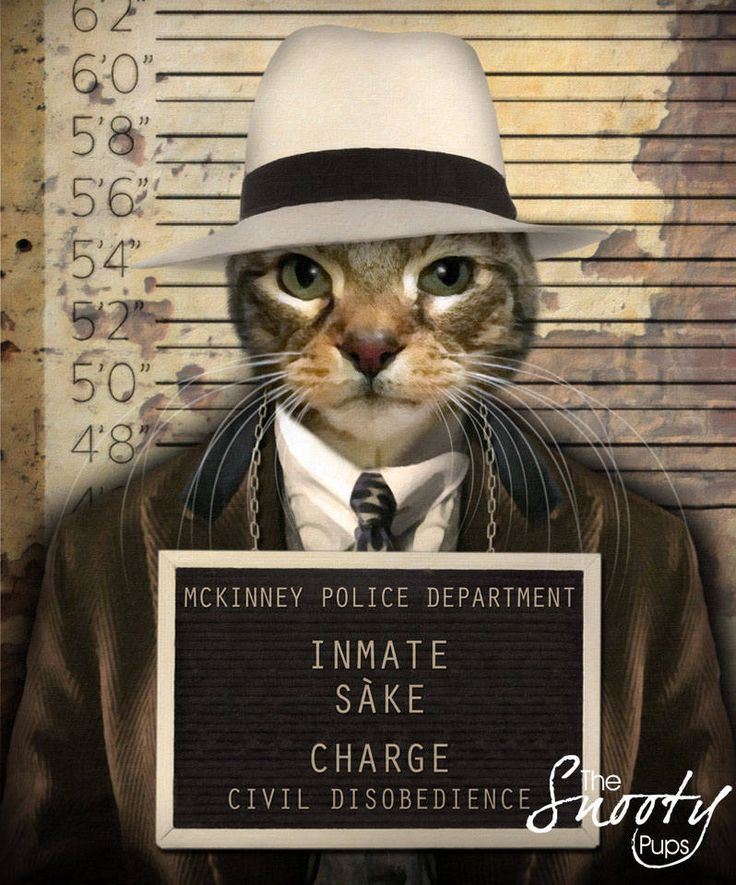 Mobster CAT PORTRAIT Is your cat gangster? What is his crime?  #custompetportrait #petportrait #catlover #bestgiftever #birthdaygift #etsyseller #petart #interiordesign #catsofinstagram #etsyshop #valentines #perfectgifts #siamese #cats #giftsforher #cute #buzzfeed #catpeople #cat #catvalentine #catlady #siamese #tabby #blackcat
