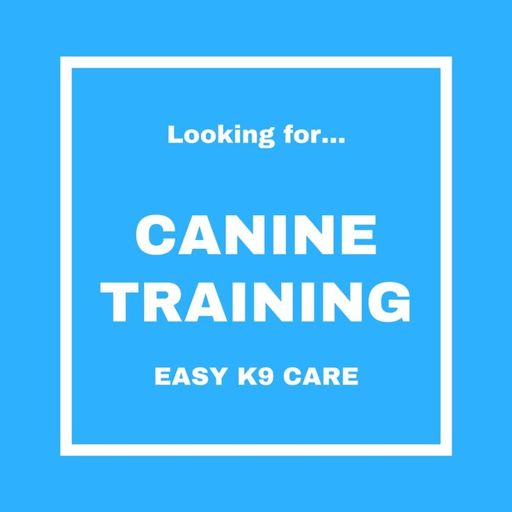 Looking for easy tips on how to take care of your canine? Tap the image to find out more!