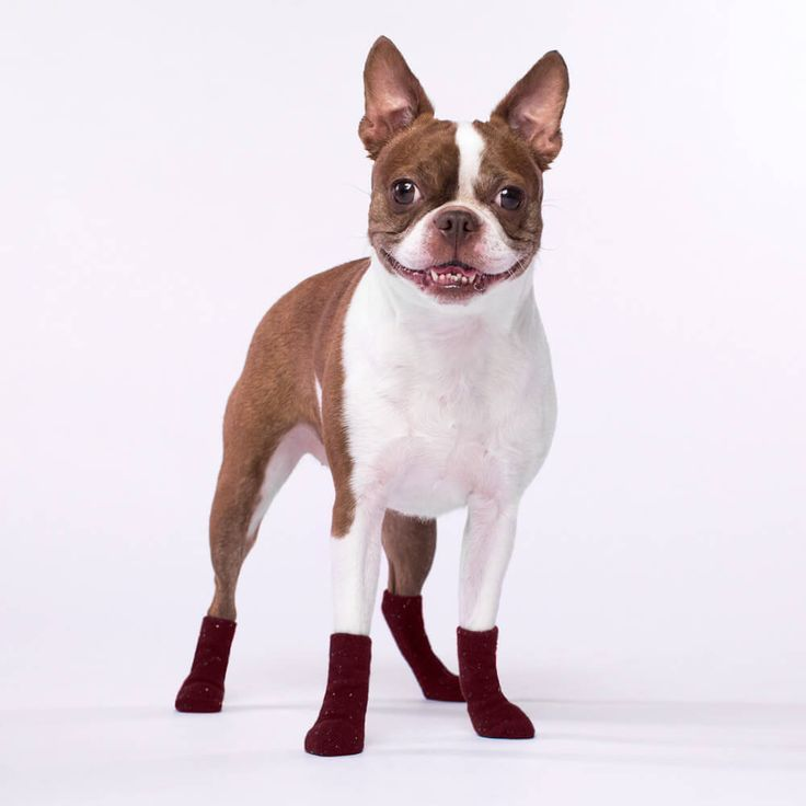 Canada Pooch Dog Socks in Maroon | The stylish cable-knit socks that keep all four paws toasty & trendy