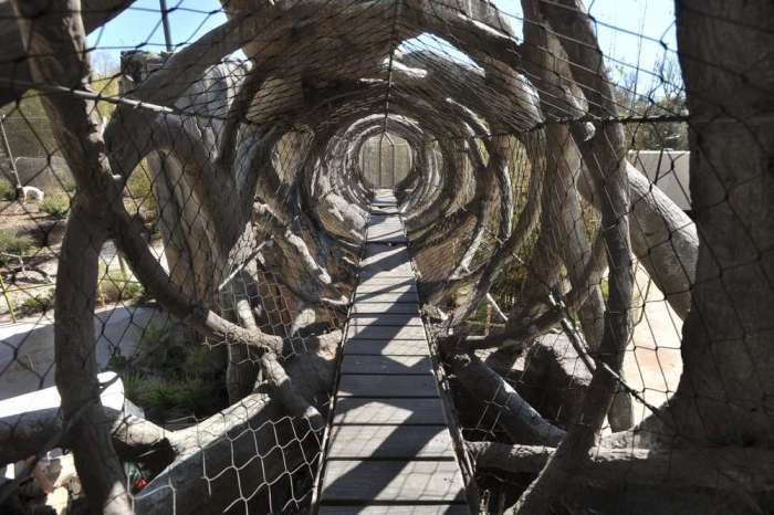 The walkway and trail system give the tigers more room to move ay Jackson ville zoo