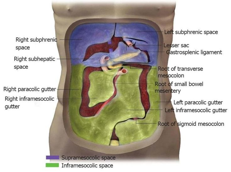 38 Best Images About Peritoneum On Pinterest Anatomy