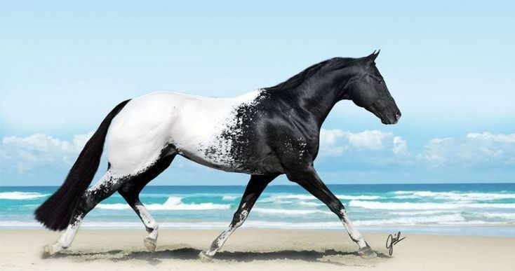 16 photographs showing the beauty of horses