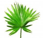 잎을 설정합니다. 외래종. 빈티지 벡터 식물입니다. 화려한. 로열티 무료 사진, 그림, 이미지 그리고 스톡포토그래피. Image 64837578.