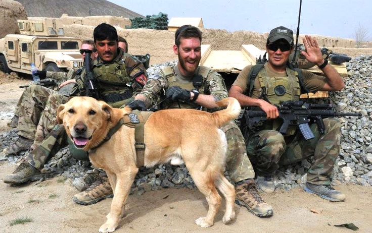 Sergeant John Nolan, Specialized Search Dog Honza Bear and member of a Special Forces Alpha Team at an undisclosed location in Afghanistan.