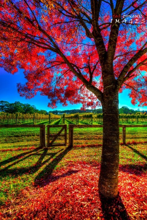 'Autumn Colors' ~ #Bowral, Southern Highlands NSW