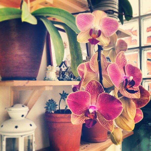 "21 Gostos, 12 Comentários - Lara Mafalda | myBelovedCraft (@laramafalda) no Instagram: ""Droping #phaleanopsis #orchid #flower #colors #instamood #instadaily #igmasters #igersporto…"""
