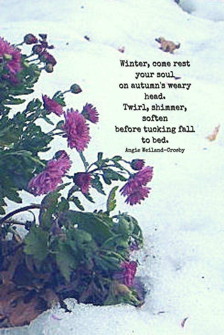 Winter Quote With Mums In Autumn Quotes Winter Autumn Fall