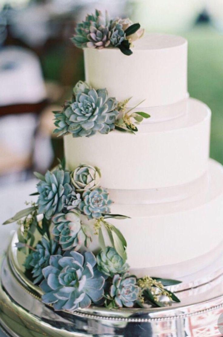 Aufgeregt, diesen Artikel aus meinem Shop zu teilen: 10 saftige Stecklinge für …   – Yummy Kuchen