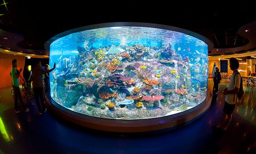 57 best awesome aquariums images on pinterest aquarium for Cylindrical fish tank