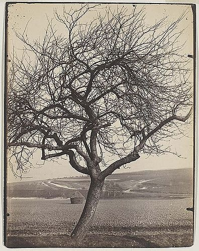 Apple tree (1900)  Eugène Atget French, 1856-1927