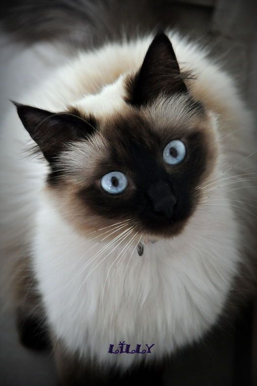 are cats endangered