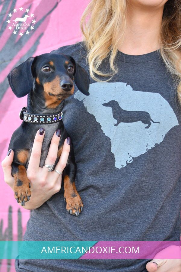 Celebrating Our State And Doxie Love With Our Dachshund State