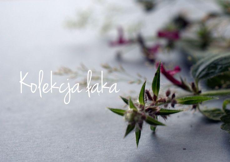 zaproszenia ślubne Koszalin, łąka, kwiaty, pole, summer, flowers, zaproszenia, wedding, ślub, papeteria, miodunka