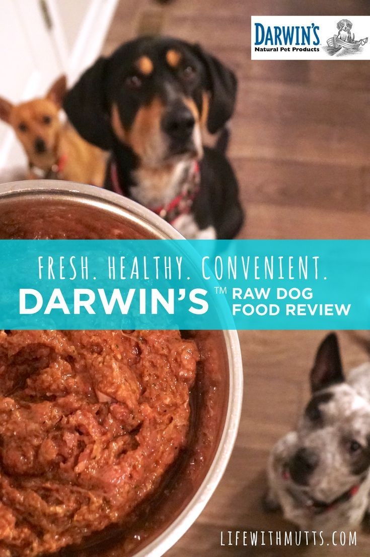 Happier Healthier Dogs Thanks To Darwin S Natural Pet Food Dog