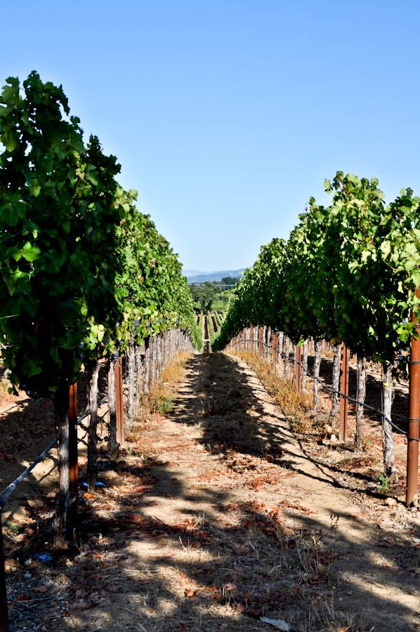 Wine country.  I want to be strolling around with a glass of wine with my hubby...
