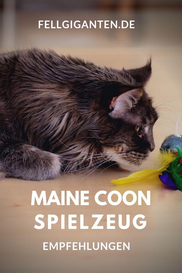 #mainecoon #maine #coon #spielzeug #katzen #katzen
