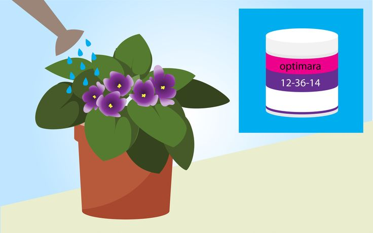 How to Grow African Violets -- via wikiHow.com