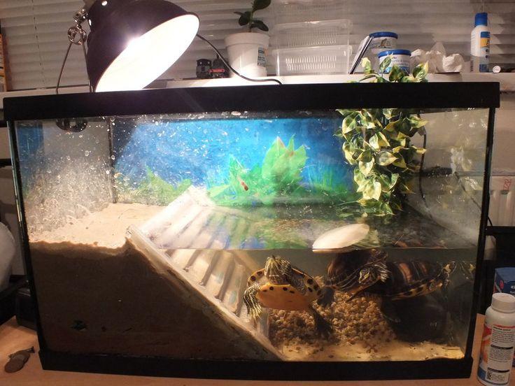 17 best images about aqarium on pinterest fish aquariums for Fish tank turtles