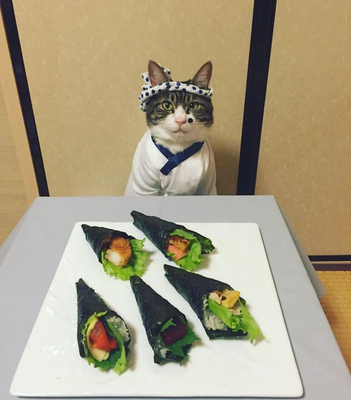 Cosplaying Cat Chef Dines With His Mom Every Night In Different Outfit http://amzn.to/2k2HTMQ http://amzn.to/2k2HTMQすいやせん!ウソついてやした!