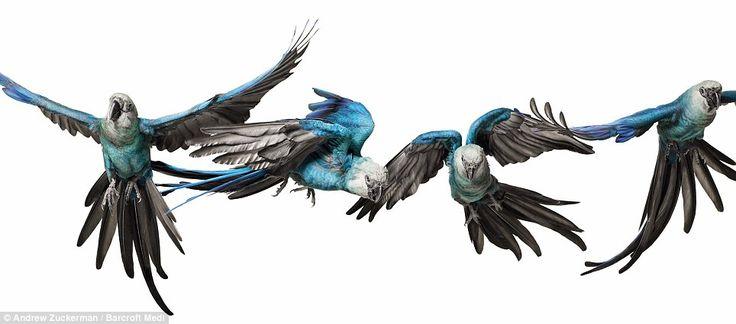 Bird 2 High definition image - Andrew Zuckerman - http://www.dailymail.co.uk/news/article-1293029/Birds-Andrew-Zuckermans-high-definition-photographs-new-book.html