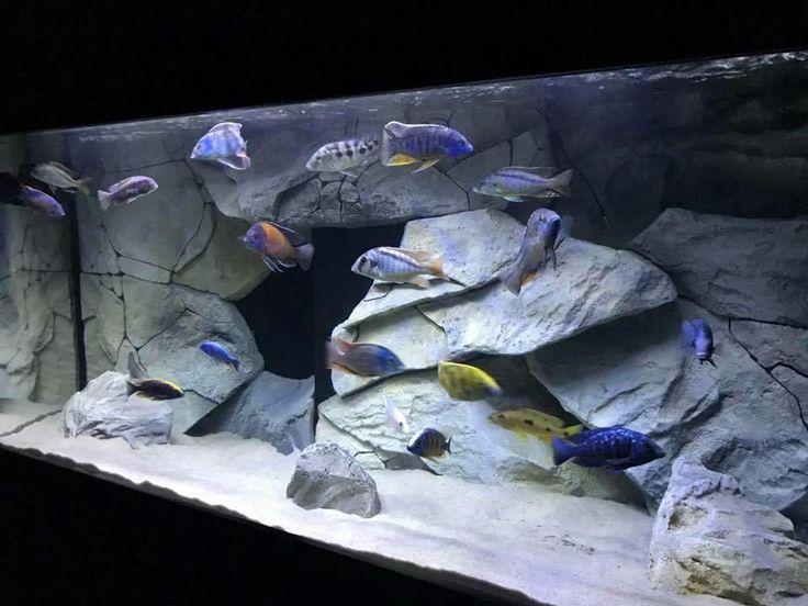 Best 25 aquarium backgrounds ideas on pinterest for Cichlid fish tank